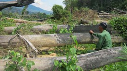 Đua nhau phá rừng - Kỳ 1: Khóc rừng