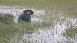 Kiến nghị giảm phí bảo hiểm nông nghiệp