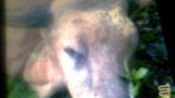 Khởi tố vụ án giết hại bò rừng