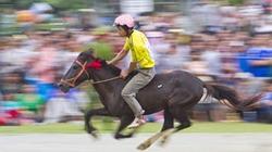 Tưng bừng đua ngựa truyền thống Bắc Hà