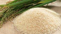 Gạo nếp cái hoa vàng đạt tiêu chuẩn chất lượng