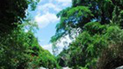 Mỗi năm mất gần 66.000ha rừng