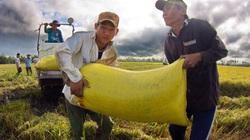 Vụ lúa hè thu 2012: Đề xuất tạm trữ vì khó tiêu thụ