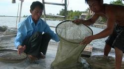 Sống khỏe nhờ nghề nuôi cá chình