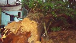 Nhà sập, cây ngã rạp vì gió lốc và mưa lớn