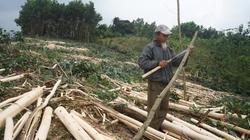 Xuất khẩu gỗ, lâm sản còn nhiều rủi ro