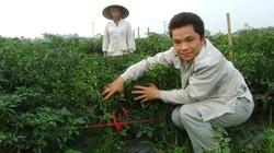 4 nhà hợp tác  trồng ớt xuất khẩu