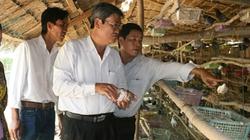 Hội Nông dân Kiên Giang: Đầu tàu giúp nông dân vượt khó
