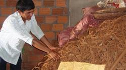Vụ thu mua gốc, rễ tiêu: Nghi vấn đem xay để trộn vào bột tiêu