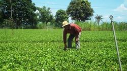 Ninh Thuận: Giúp nông dân làm hệ thống tưới nhỏ giọt