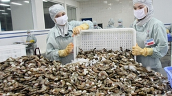 Xuất khẩu thủy sản có thể đạt 6,5 tỷ USD