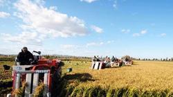 9X giúp phát triển nông nghiệp Trung Quốc