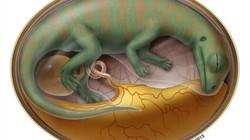 Phát hiện 200 trứng khủng long cực quý