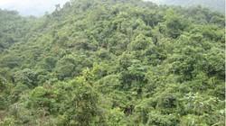Chuẩn bị đóng cửa rừng tự nhiên
