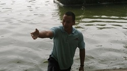 Hy hữu: Nam thanh niên bơi cùng rùa Hồ Gươm