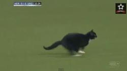 """Clip: Mèo đen vào sân """"ám"""" chủ nhà"""