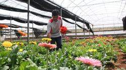 Dubai tăng nhập hoa cây cảnh Việt Nam