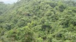 Tổng điều tra, kiểm kê rừng toàn quốc từ 1.6