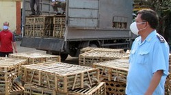 Bắt giữ 3,7 tấn mèo sống nhập lậu từ Trung Quốc