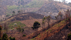 Lâm Đồng: Cán bộ bảo vệ rừng bị đe dọa
