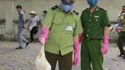 1 tấn gà tươi sống và nội tạng nghi từ Trung Quốc