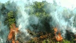 Một Thiếu tá hi sinh khi chữa cháy rừng