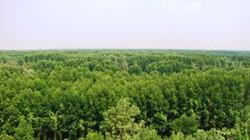 """Cảnh cáo """"bộ sậu"""" ban quản lý rừng phòng hộ Hương Thủy"""