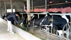 Ngày càng nhiều  triệu phú chăn nuôi