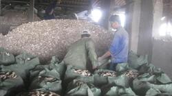 Thị xã Thái Hòa, Nghệ An:  Dân khổ vì nhà máy ô nhiễm