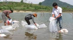 Phú Yên: Thả cá giống ở hồ thủy điện