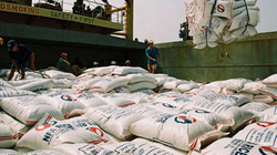 Gạo Việt bị lo ngại về độ an toàn ở Mỹ: Thiếu cơ sở, không thuyết phục!