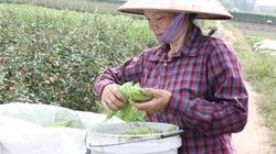 Hà Nội:  Khuyến nông gắn liền xây dựng nông thôn mới