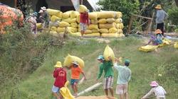 Tạm trữ lúa gạo - chính sách yếu kém và lỗi thời