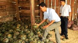 """Vụ """"Ôm nợ vì giống bí Trung Quốc"""": Phê bình trưởng phòng NNPTNT và 2 chủ tịch xã"""