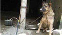 Kẻ trộm chó vác mã tấu tấn công người dân