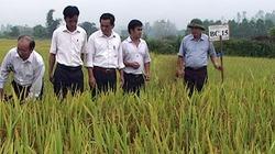 Nông dân sử dụng chưa đúng quy trình hướng dẫn?