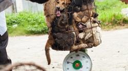 Hàng ngàn con chó bị hành hạ từ Thái Lan sang Việt Nam