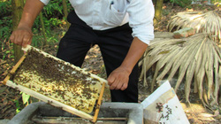 Thoát nghèo từ nghề nuôi ong