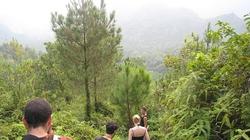 Hải Phòng: Phát triển rừng hướng tới hiệu quả, bền vững