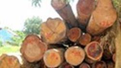 Vụ phá rừng tại Gia Lai: Công an tỉnh  vào cuộc