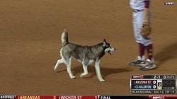 """Clip: """"Nát"""" trận bóng vì... chó chạy vào sân kiếm ăn"""