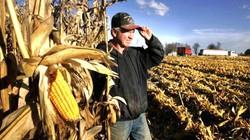 Mỹ: Thượng viện thông qua dự luật nông nghiệp 1.000 tỷ USD