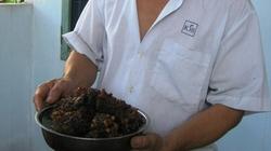 Nuôi ong, thu nhập gần 200 triệu đồng/năm