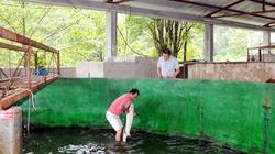 Thiếu kinh phí  khảo nghiệm cá tầm