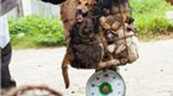 5 triệu cá thể chó bị giết thịt mỗi năm