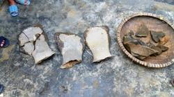 """Xôn xao về hóa thạch """"khủng"""" ở Nghệ An"""