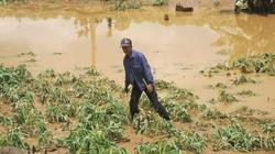 Vỡ đập thủy điện Ia Krel 2: Thiệt hại khoảng 5 tỷ đồng