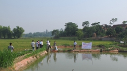 Bắc Giang: Sẽ nhân rộng mô hình lúa cá xen canh