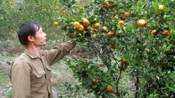 Bón phân NPK  Văn  Điển cho cây cam