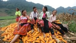 Việt Nam được FAO vinh danh về xóa đói, giảm nghèo